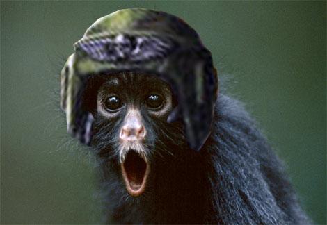 IG-spider-monkey