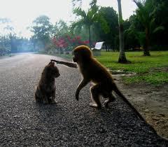 monkey loves cat