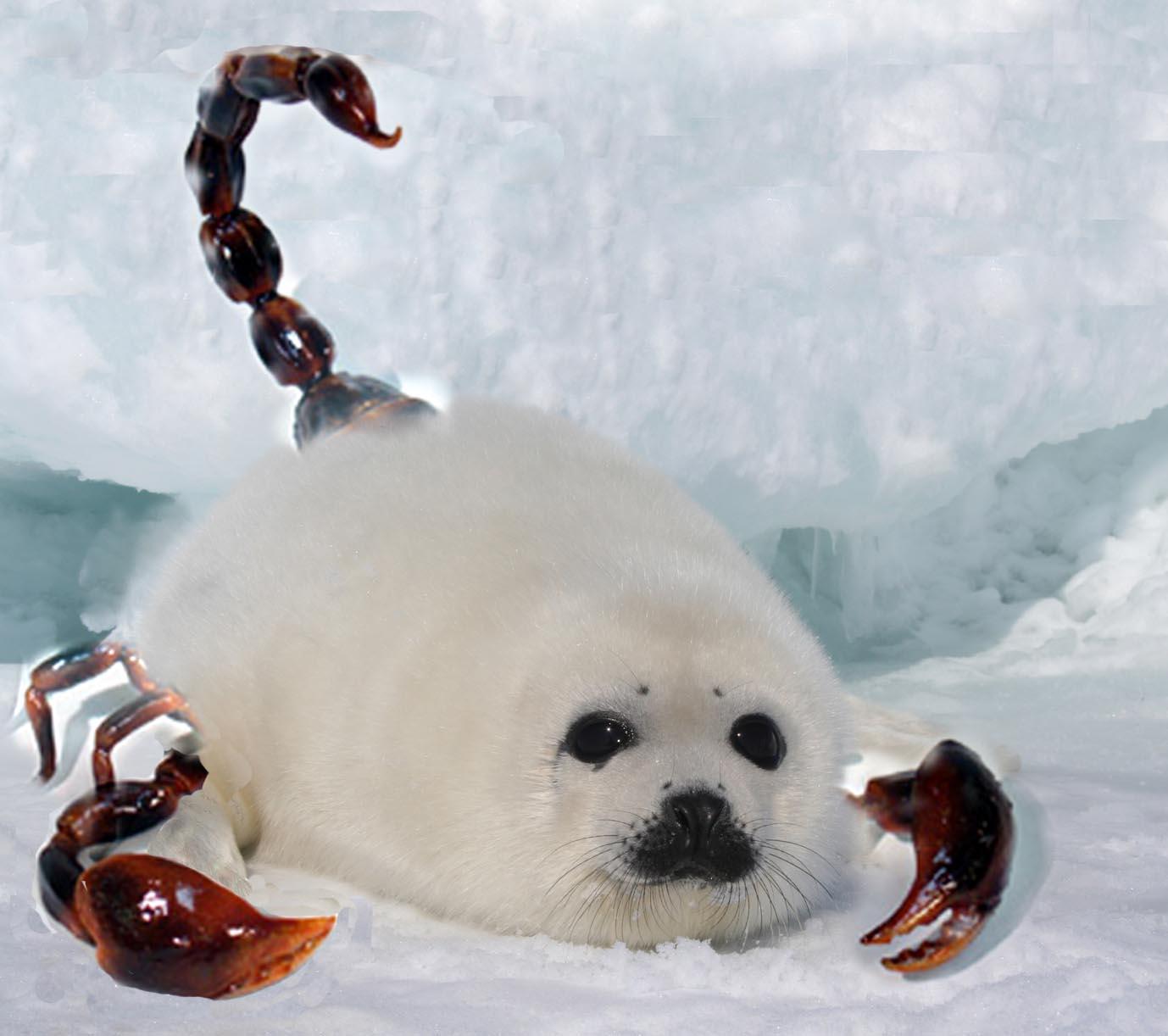 scorpion seal