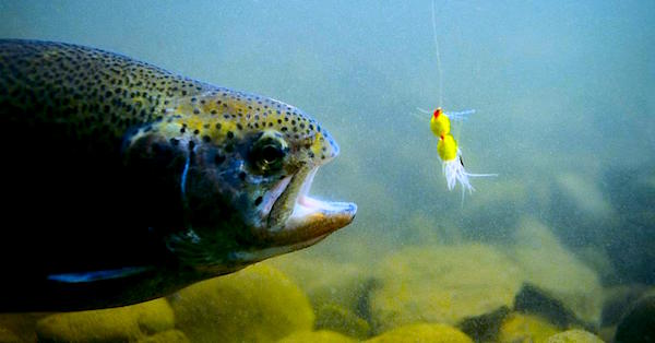 fish-lure