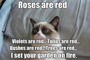 rosesareredgrumpycat