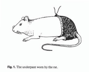 the-underpant-worn-by-the-rat1