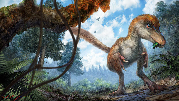 coelurosaur-feathers-amber