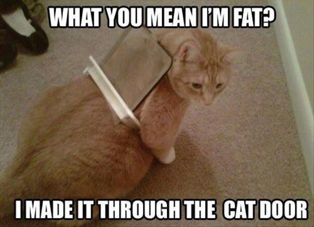 Fat-Cat-Stuck-In-A-Cat-Flap